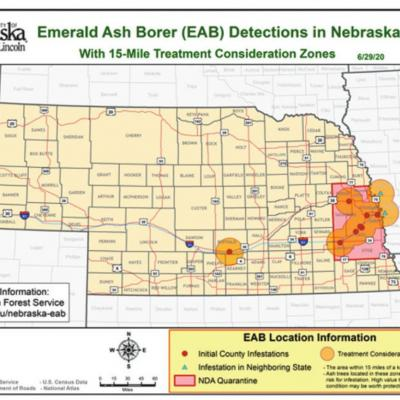 Emerald Ash Borer Detected In Nebraska