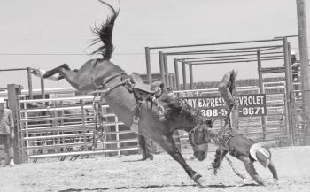 Bulls & Broncs featured at Rough Stock Rodeo